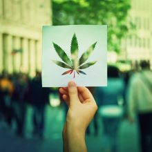 What You Need to Know About Cannabis Legalization in the Housing Market